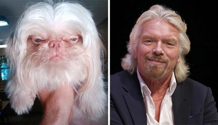 Cara de un perro que se parece a Richard Branson