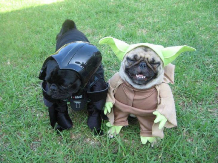 pugs disfrazados de Darth Vader y Yoda