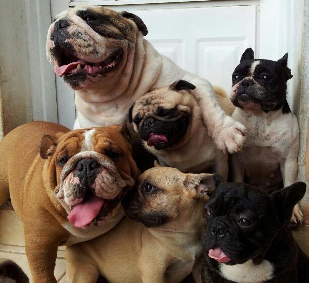 pug abrazado por otros perros