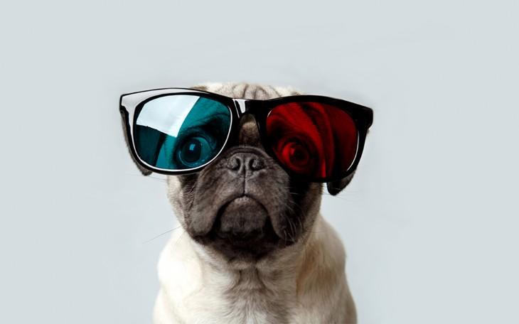 Pug con lentes para ver en 3D