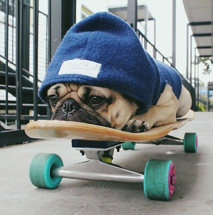Pug en una patineta