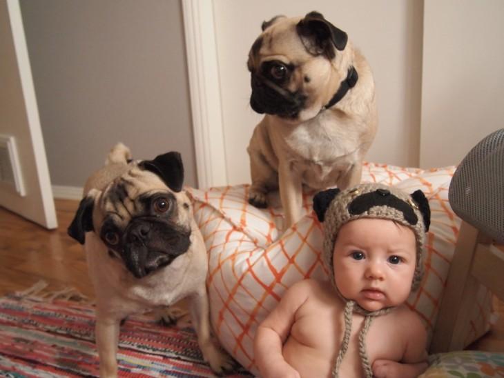 un bebé con dos pugs a un lado