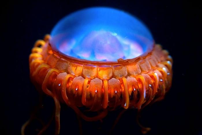 26 criaturas de mar que parecen salidas de peliculas de CF