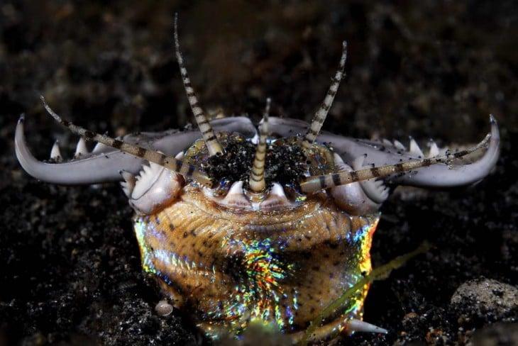 Imagen de la cabeza de un gusano Bobbit