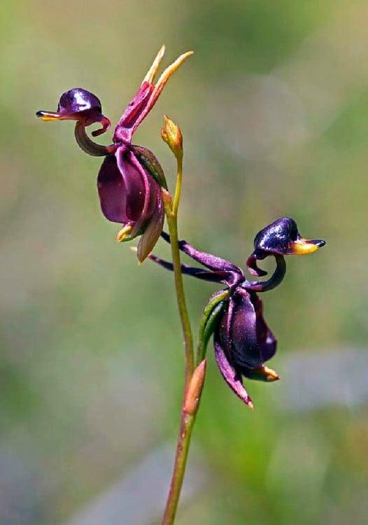 Flores que simulan dos patos volando