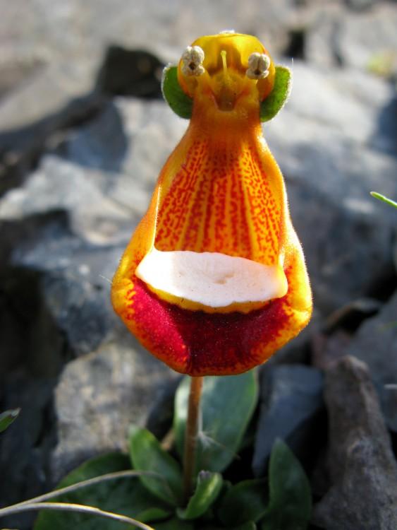 Flor en forma de extraterrestre