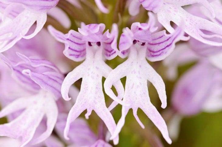 2 Orquídeas que simulan tener la figura de un hombre desnudo