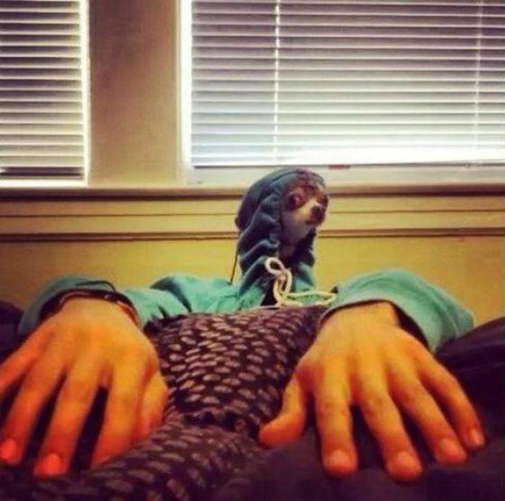 perro cn manos humanas