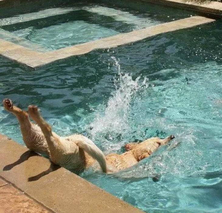 perro que cae al agua de la piscina