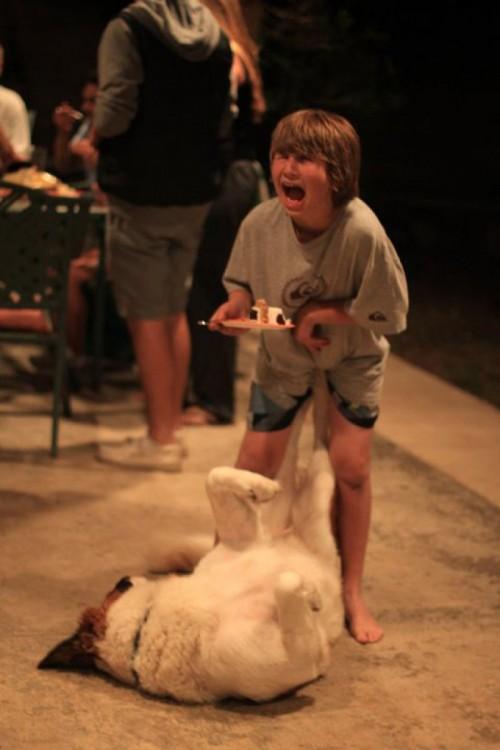 perro le pega patada a nene en la parte intima