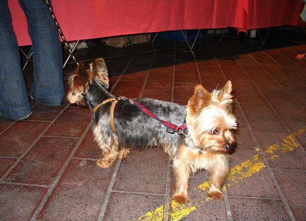 Nació en Rosario perro con dos cabezas