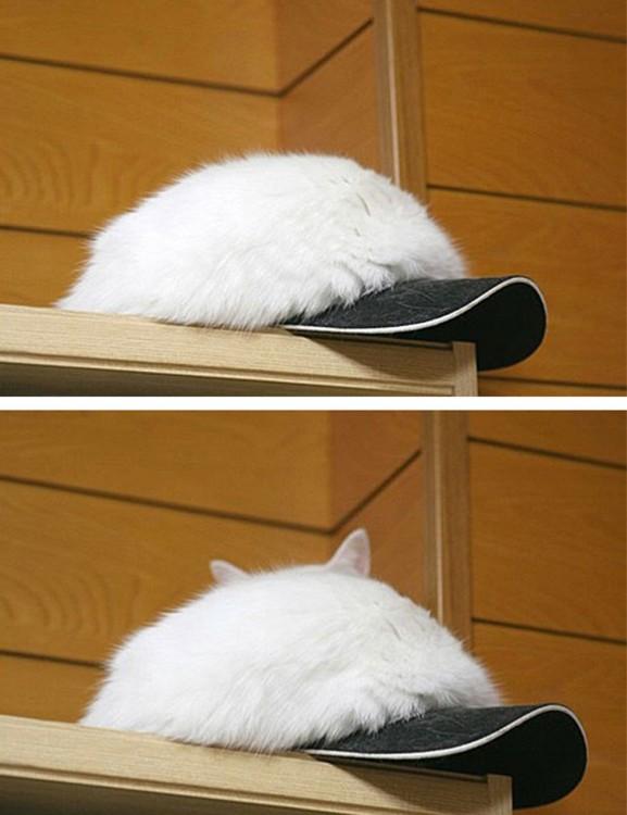 Gato  en una gorra
