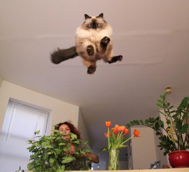 Gato da un fuerte salto sobre una barra con plantas