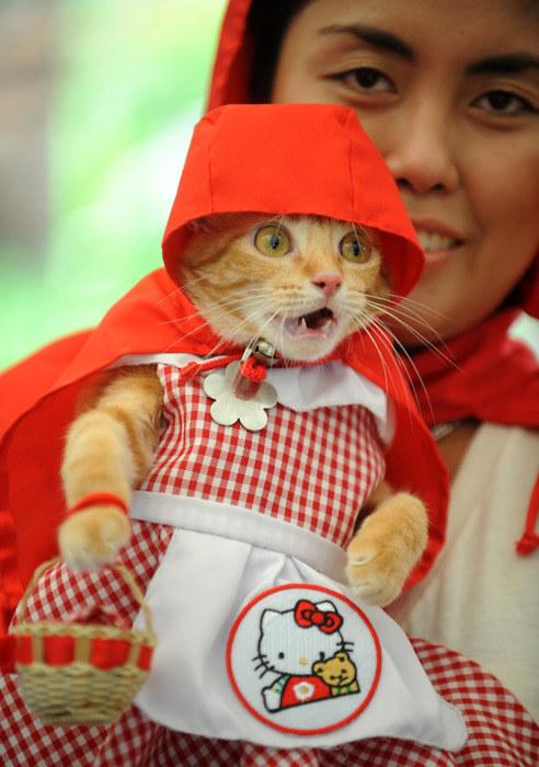 Gatita vestida con un vestido y capucha en color rojo