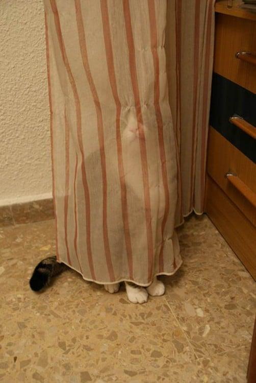 Gato escondido tras una cortina