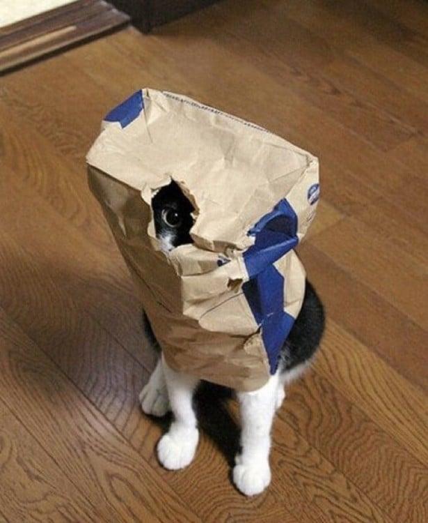 Gato con una bolsa de papel sobre él