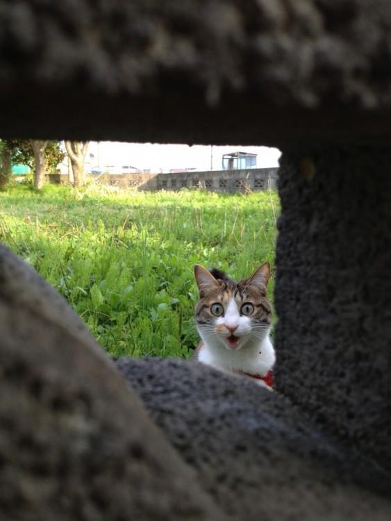 Gato tras unas piedras que forman un cuadro con cara de sorpresa