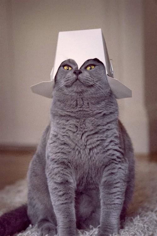 Gato en color gris sentado con un sombrero de papel en la cabeza