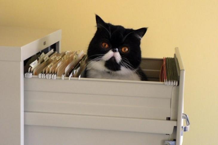 Gato dentro de un archivero de papeles con la cabeza fuera