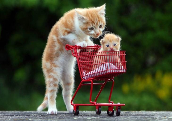 Gato empujando un carrito de compras con un pequeño gatito dentro