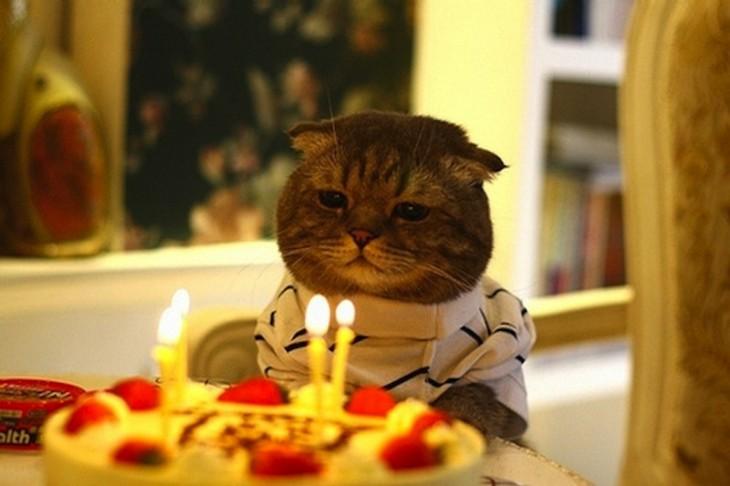 Gato frente a un pastel de cumpleaños con unas velas encendidas