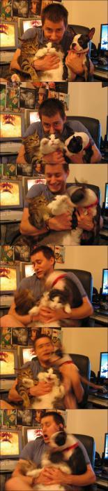Secuencia de fotos de un hombre con dos gatos y un perro