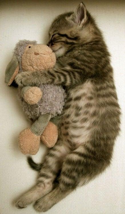 Gato dormido en el suelo abrazando con sus patas delanteras un peluche en forma de oveja