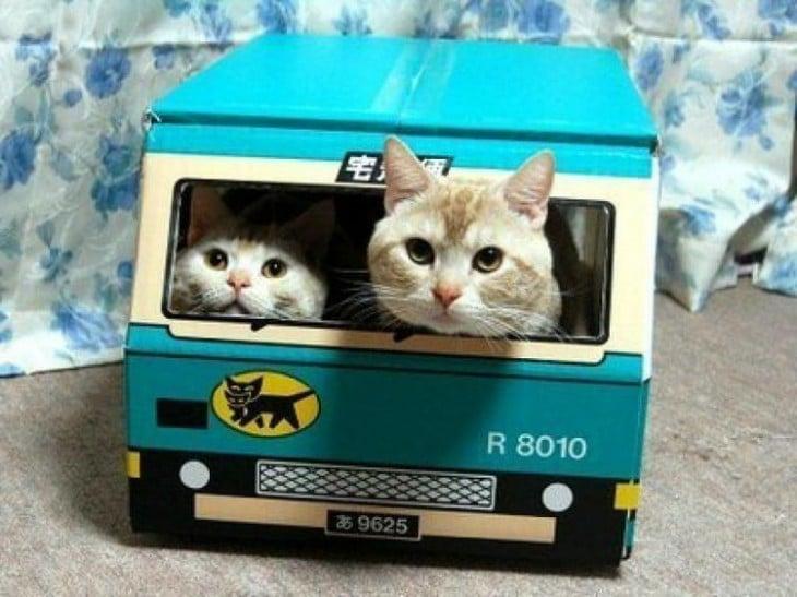 Dos gatos dentro de un autobús hecho de cartón en color azul