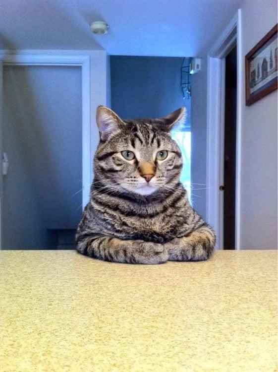 Gato con las patas delanteras sobre una mesa y mirando fijamente hacia enfrente