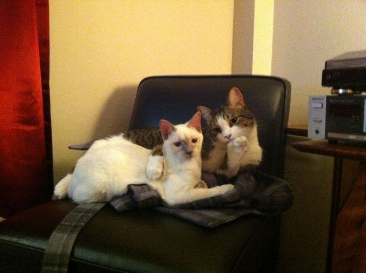 Dos gatos sobre una silla uno abrazando al otro con una pata