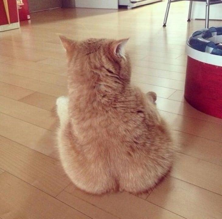 Gato sentado que parece tener trasero