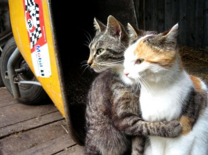 Un gato abrazando con dos patas a otro gato