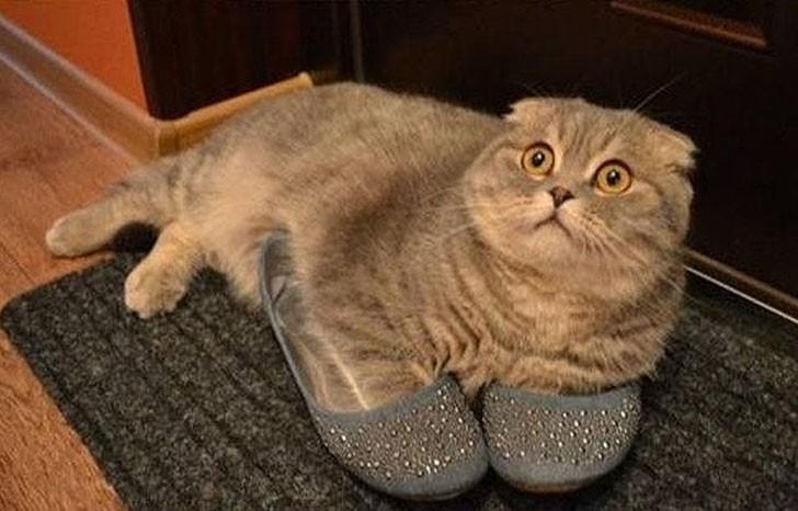 Gato sobre los zapatos de una mujer con la mirada hacia arriba