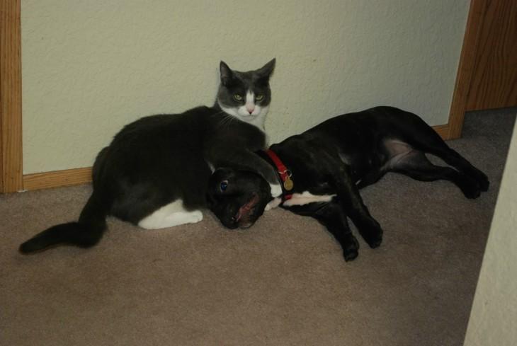 Gato negro con sus patas enredadas alrededor del cuello de un perro