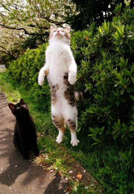 Dos gatos al aire libre, uno sentado en el suelo y el otro dando un gran salto