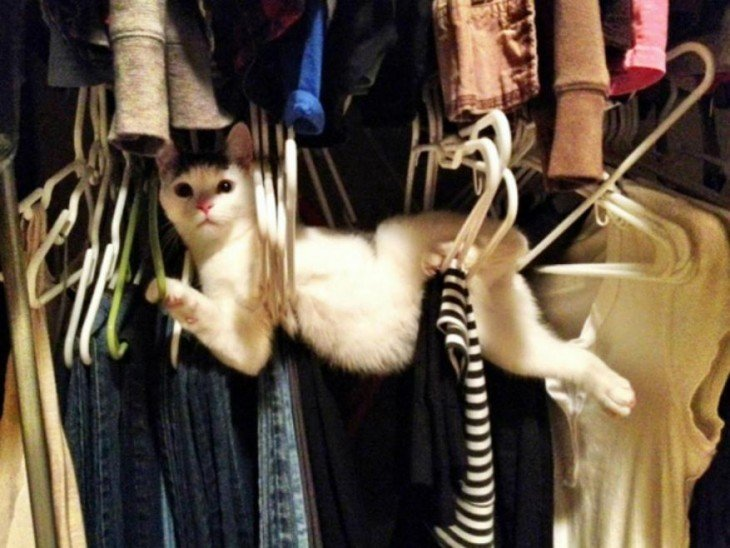 Gato entre ganchos de ropa en un closet