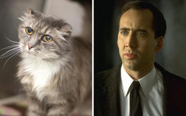 Gatos Que Se Parecen A Nicolas Cage