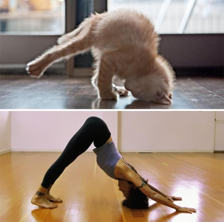chica y gato haciendo Yoga