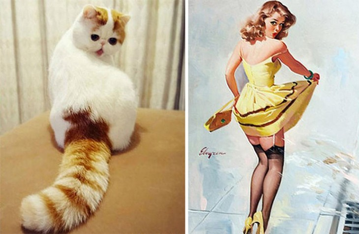 Gatito Pin Up