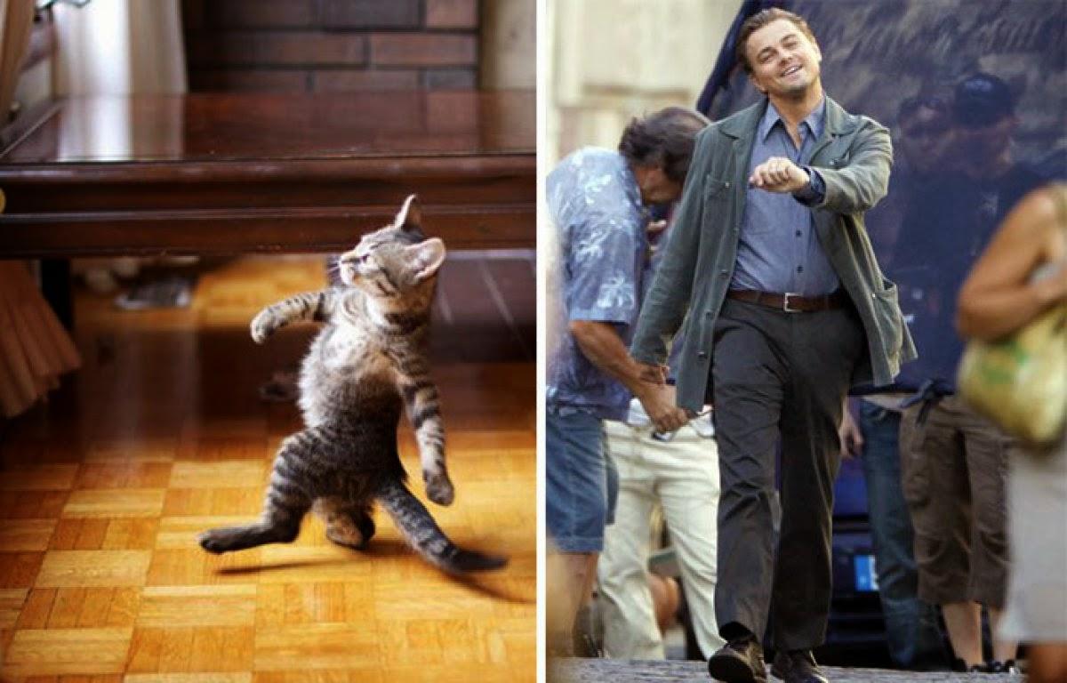 Gatos que se parecen a personas o a objetos