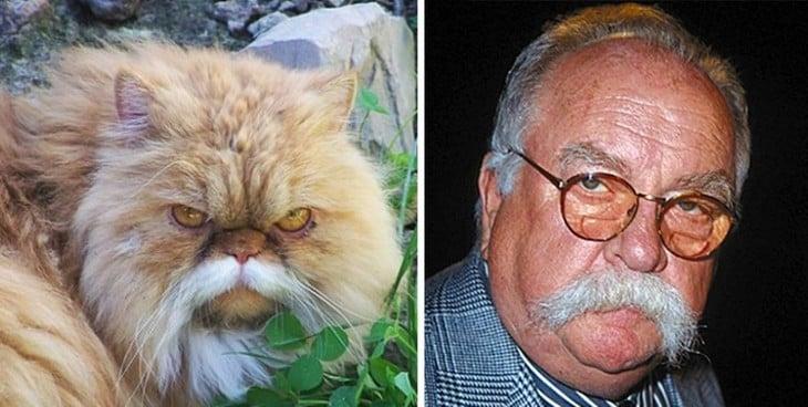 Gatos Que Se Parecen A Wilford Brimley