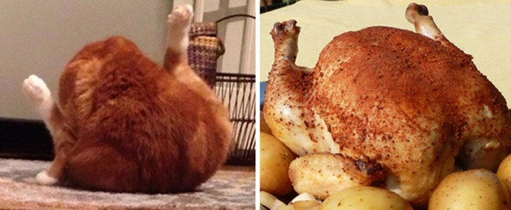 Gatito se parece a un pollo al Spiedo