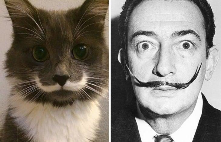 Gatos Que Se Parecen A Salvador Dalí