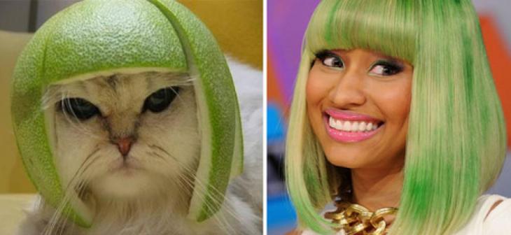 Gatos Que Se Parecen A Nicky Minaj
