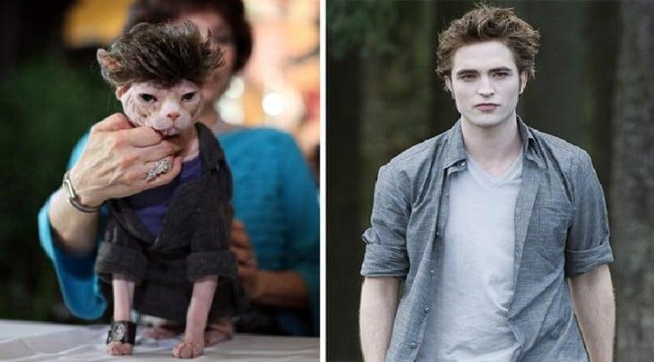 Gatos Que Se Parecen A vampiros, Edward