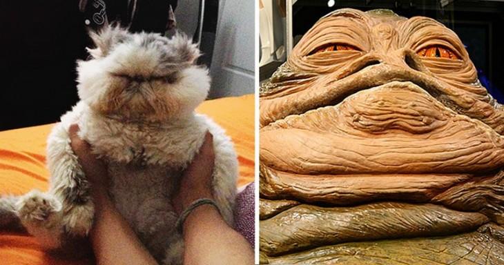 Gatos Que Se Parecen A Jabba The Hutt