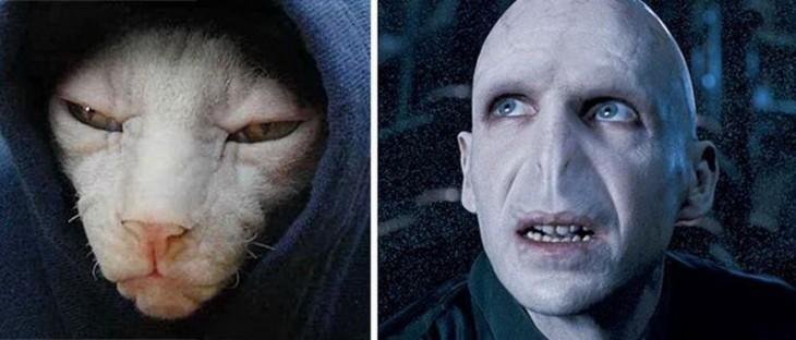 Gatos Que Se Parecen A Voldemort