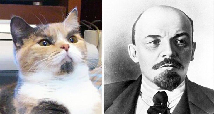 Gatos Que Se Parecen A  Lenin