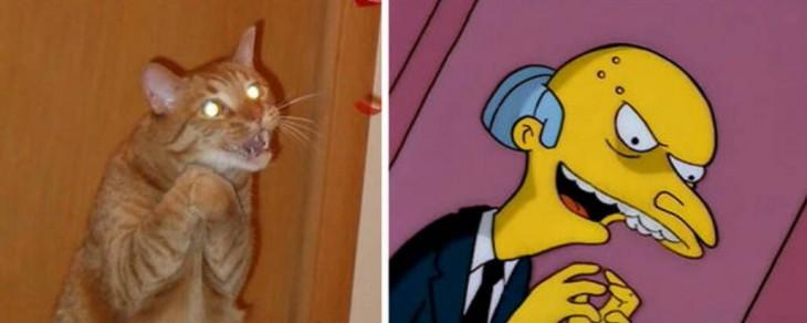 Gatos Que Se Parecen A Mr Burns
