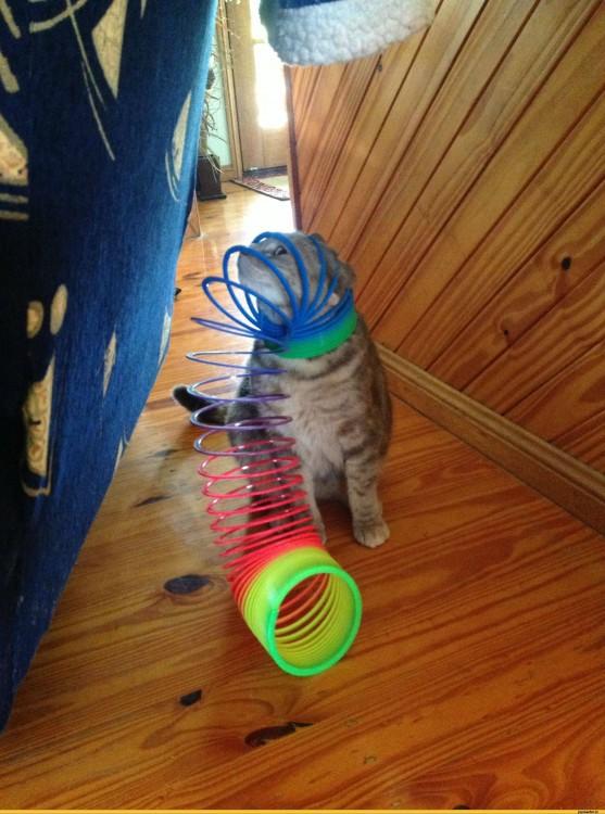 Gato atrapado en juego de colores